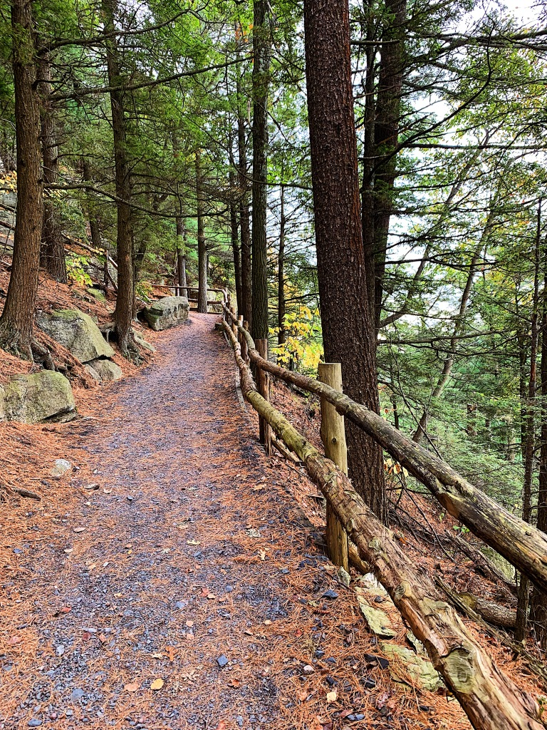 mountain trail surrounded by pines