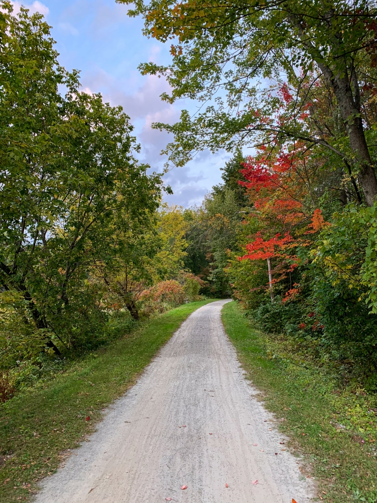 Gravel trail flanked with trees with changing colors